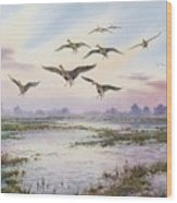 White-fronted Geese Alighting Wood Print by Carl Donner