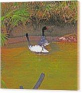 White, Geese, On, Pond Wood Print