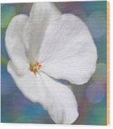 Winter White Geranium  Wood Print
