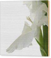 White Gladiola Wood Print
