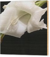 White Gladiolus Wood Print