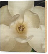 White Glow Wood Print