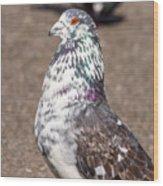 White-gray Pigeon Profile Wood Print