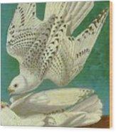 White Gyrfalcons Wood Print