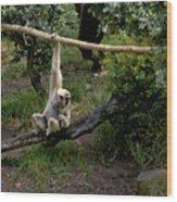 White Handed Gibbon 1 Wood Print