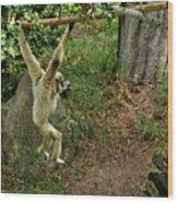 White Handed Gibbon 3 Wood Print