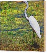 White Heron 1 Wood Print