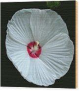 White Hibisci #18 Wood Print