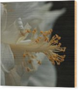 White Hibiscus Wood Print