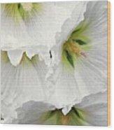 White Hollyhocks Wood Print