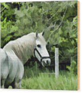 White Horse In A Green Pasture Wood Print