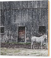 White Horse In A Snowstorm  Wood Print
