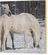 White Horses In The Snow  Wood Print