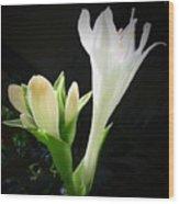 White Hostas Blooming 7 Wood Print