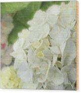 White Hydrangea At Rainy Garden In June, Japan Wood Print