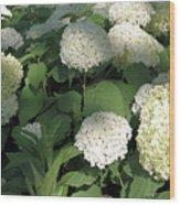White Hydrangea Bush Wood Print