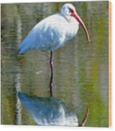 White Ibis And Reflection Wood Print