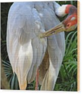 White Ibis At The Zoo Wood Print