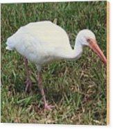 American White Ibis Bird Wood Print