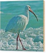 White Ibis Paradise Wood Print