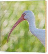 White Ibis Portrait Wood Print