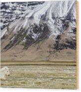 White Icelandic Horse Wood Print