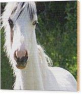 White Indian Pony Wood Print