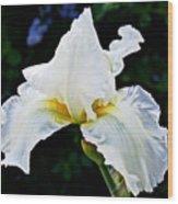 White Iris At Pilgrim Place In Claremont-california Wood Print