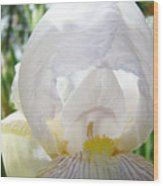 White Iris Flower Art Print Sunlit Irises Baslee Troutman Wood Print