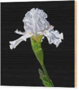 White Iris On Black Background Wood Print