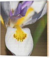 White Iris One Wood Print