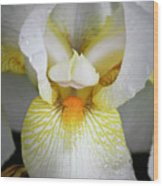 White Iris Study No 1 Wood Print