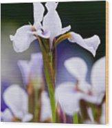 White Japanese Iris 2 Wood Print
