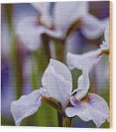 White Japanese Iris Wood Print