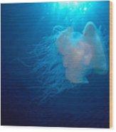 White Jellyfish Wood Print