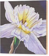 White Jonquil Wood Print