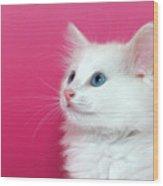 White Kitten On Pink Wood Print