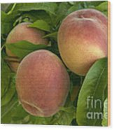 White Lady Peaches On A Branch Wood Print