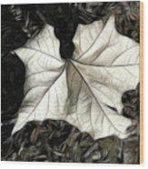 White Leaf On The Ground Wood Print