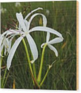 White Lilies In Bloom Wood Print