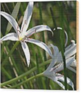 White Lillies Wood Print
