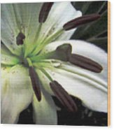 White Lilly Equalized Wood Print