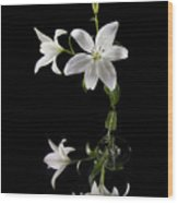 White Lilly With Reflection And Water Drop Wood Print