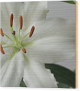 White Lily 1 Wood Print