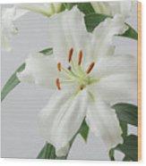 White Lily 2 Wood Print