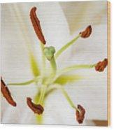 White Lily Macro Wood Print