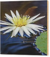 White Lily On Pond Wood Print