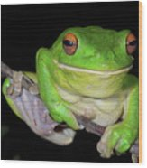White-lipped Tree Frog Wood Print