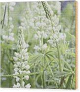 White Lupines Wood Print