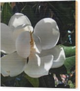 White Magnolia Flower 01 Wood Print